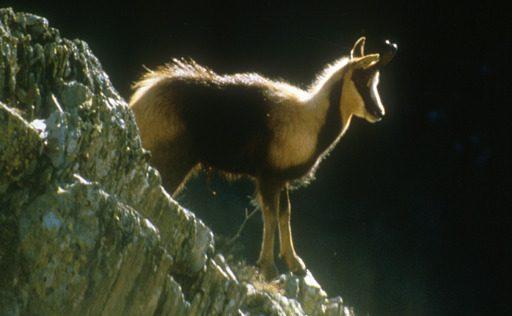Rando-Parc-National