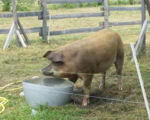 Maison des Cochons